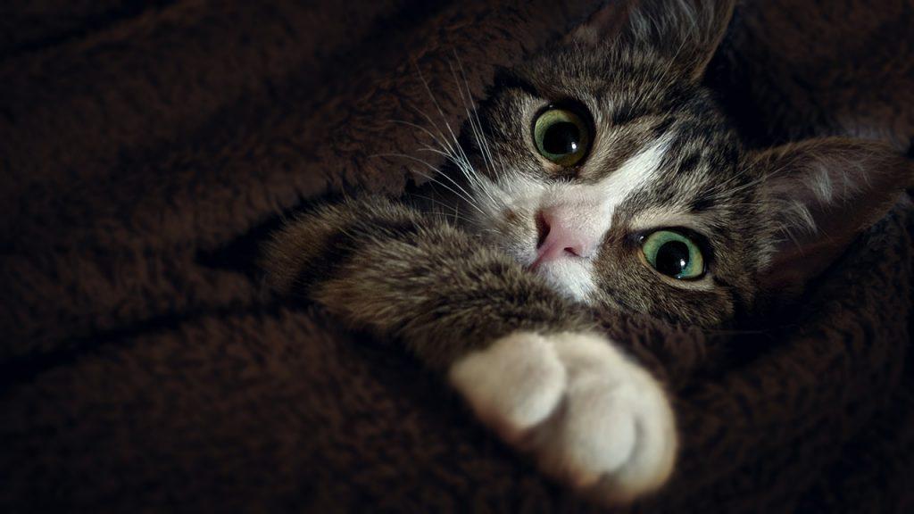France: Code juridique pour animaux